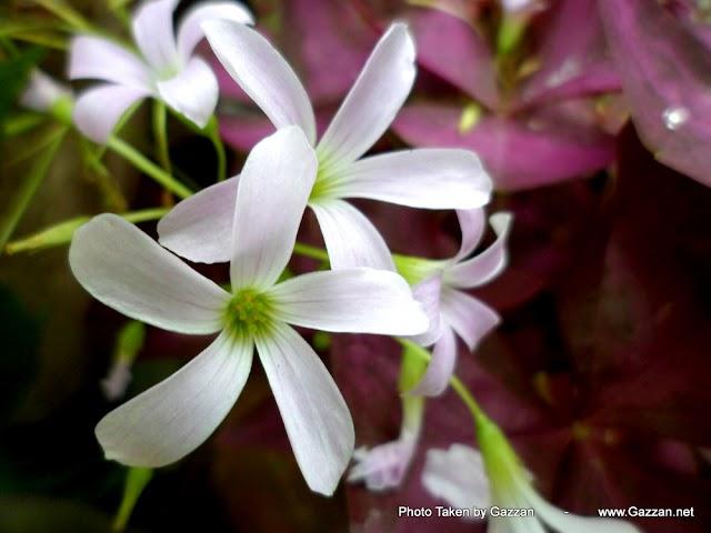 Srilanka Flowers from Badulla