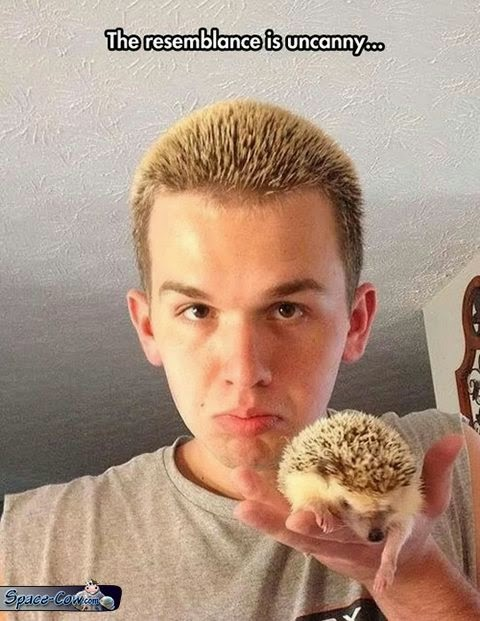 funny hedgehog animals picture
