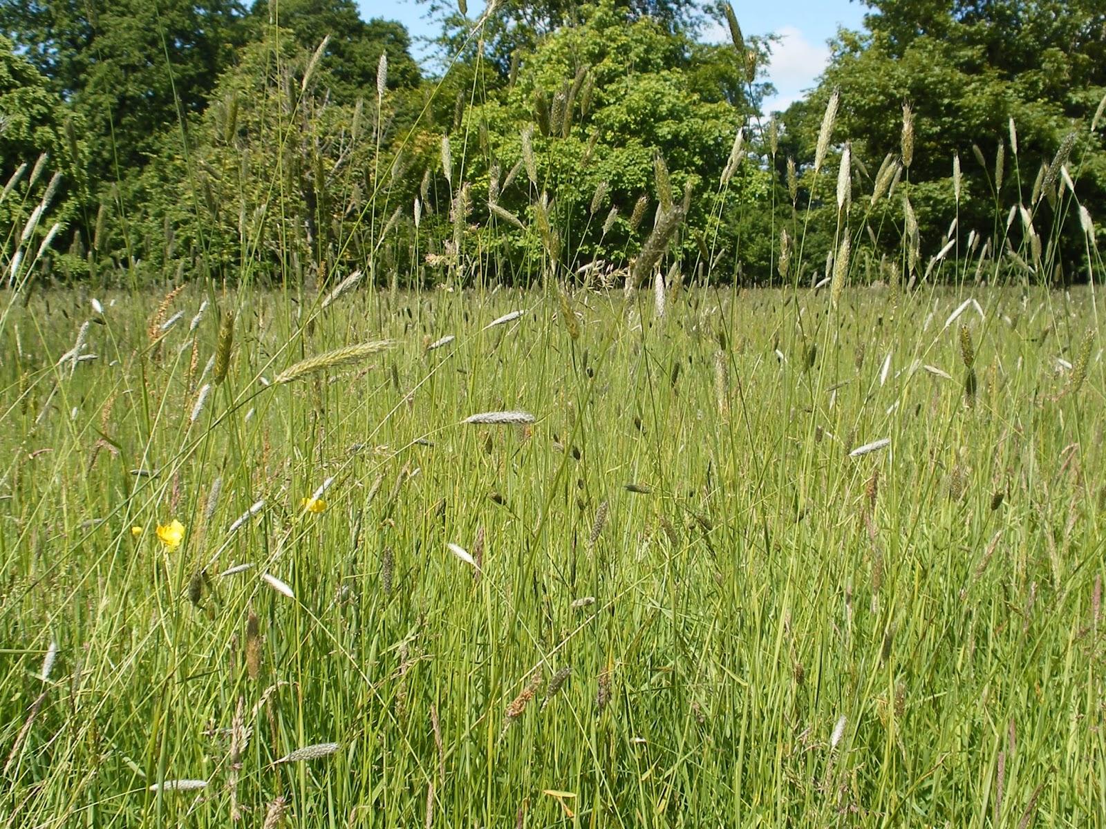 Caitriona sweeney swaying like the long grasses for Like long grasses
