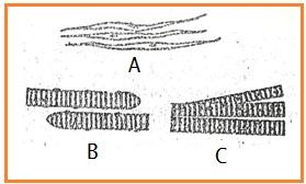 BIOLOGI GONZAGA: SOAL UJIAN KELAS XI SEMESTER 1 - 2