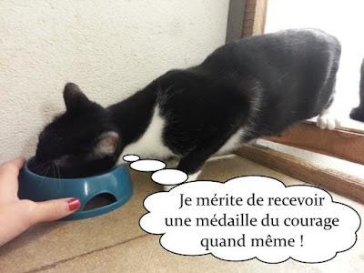 Chat noir et blanc mange dans une gamelle.