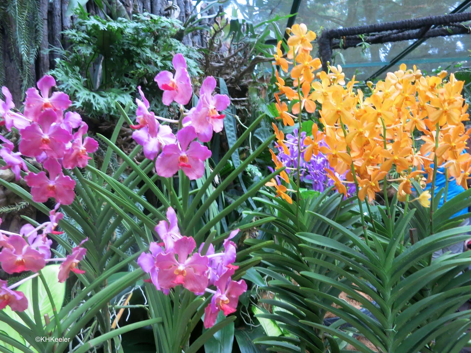 A Wandering Botanist: Tropical Flowers