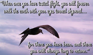 Airplane quotes pictures tasted flight
