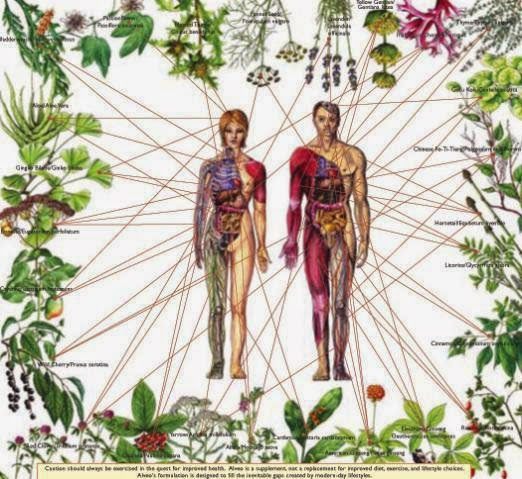 ☯ Traditional Herbal Healing ☯