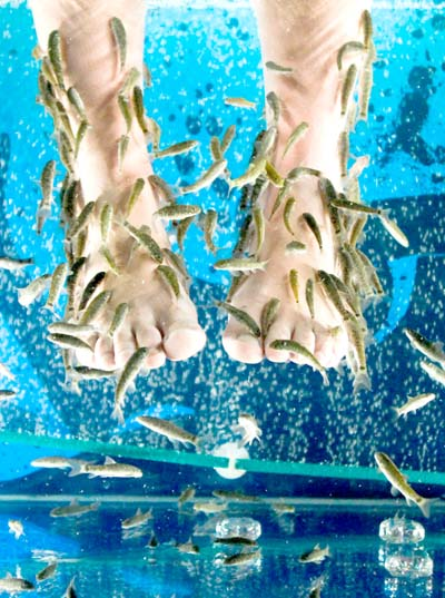 Fish therapy herbal medicine and nutrition for Garra fish spa