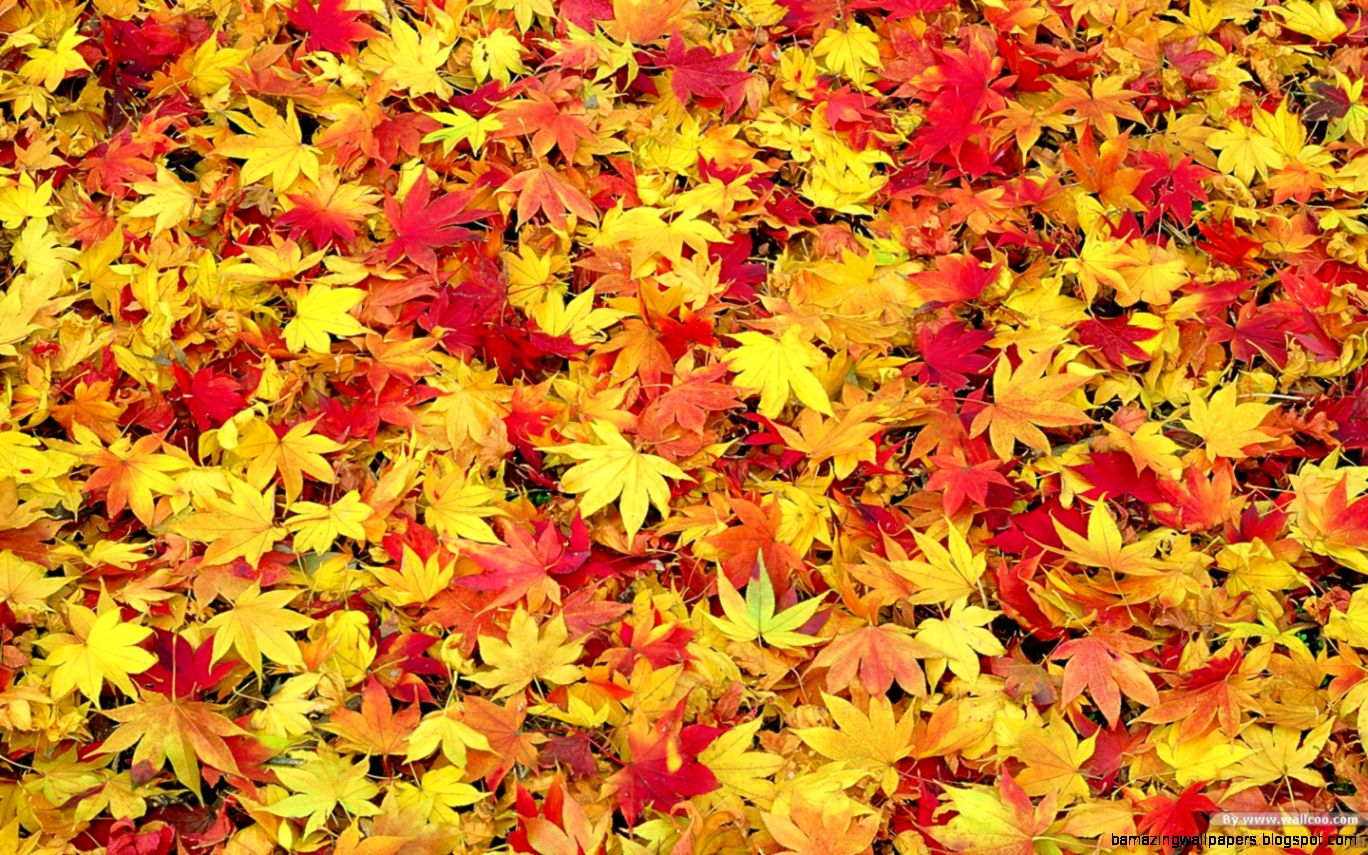 HD Fall Leaves Wallpaper   WallpaperSafari