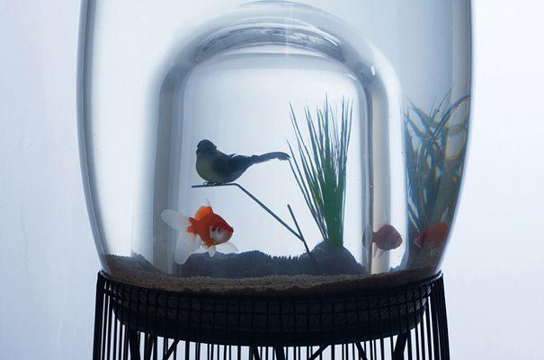 20 Akuarium Paling Unik dan Kreatif di Dunia : Duplex Aquarium + Bird Cage