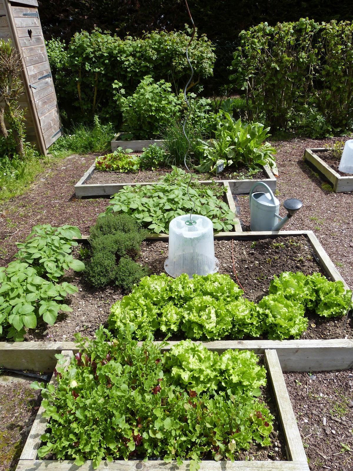On verra au jardin des nouveaut s au potager en carr s - Petit jardin potager carre ...