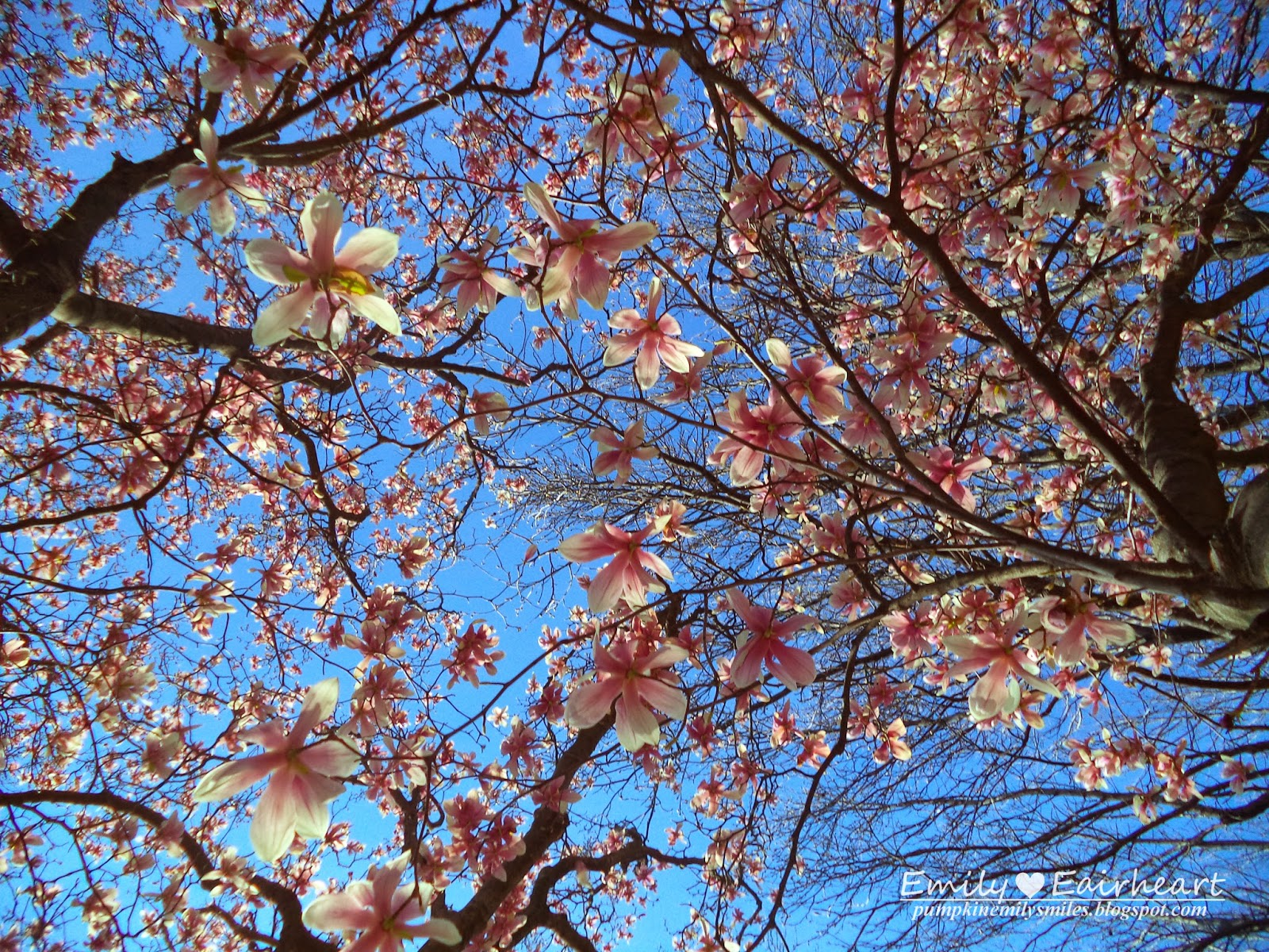 Perspective shot of a tree with pink flowers.