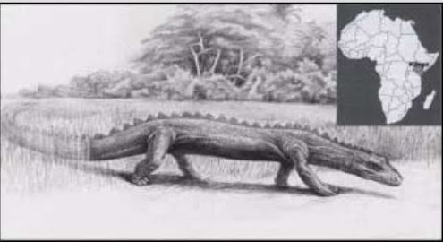 Living Dinosaurs In Wikileaks Video And The Likouala Swamp In The Congo 23