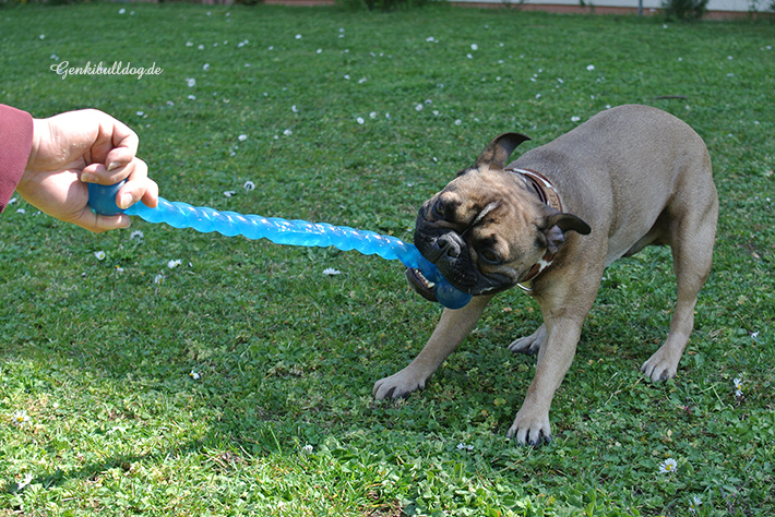 Kong Safestix Hundespielzeug