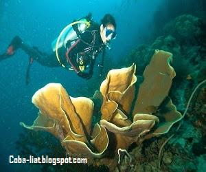 Tempat diving di indonesia