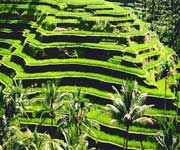 The Rice Terraces of the Philippine