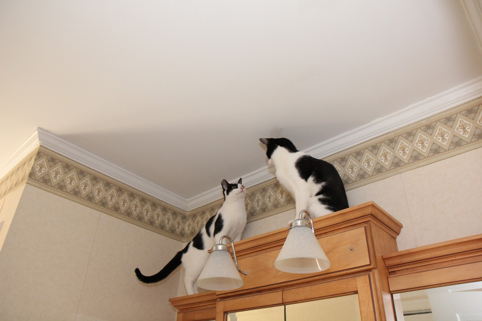 Two cats on top of the medicine cabinet