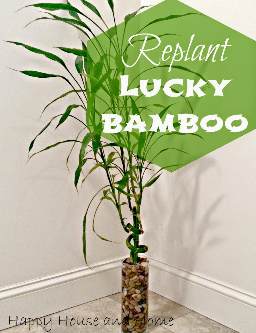 indoor house plants, replant house plants, lucky bamboo, home decor