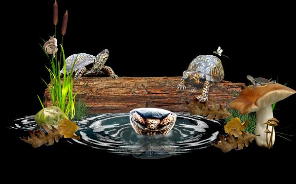 http://3.bp.blogspot.com/-RyivqtbgIt0/VS-a2lQ6AOI/AAAAAAAALPA/-Da5S1-8wfE/s1600/chey0kota_turtletime%2B%5BPDW%2BPreview%5D.png