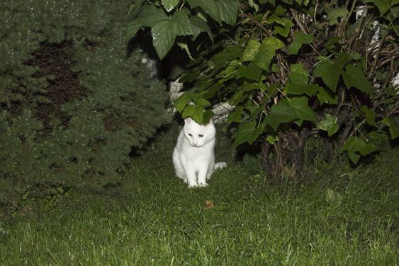 Etsijäkoira voi auttaa piilossa olevan eläimen olinalueen kartoituksessa.