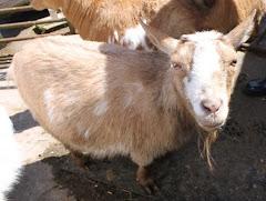 Animal Spotlight: YODA