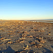 Mass starfish stranding reported on Fripp Island South Carolina
