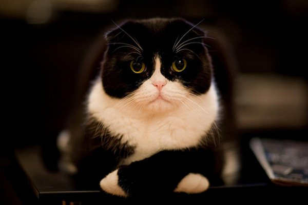 funny cat pictures, funny black and white cat