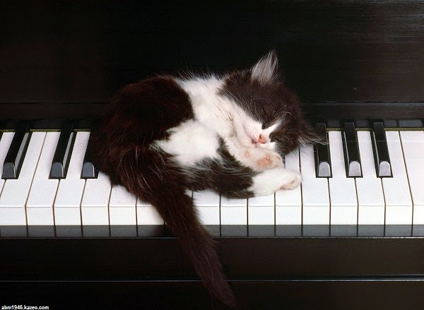 Photo chat noir et blanc sur un piano