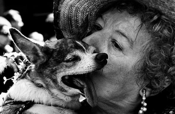 Vintage Dog Photographs By Elliott Erwitt Vintage Everyday