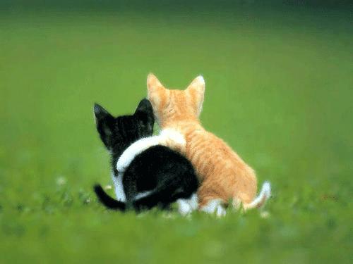 Imagenes de amistad