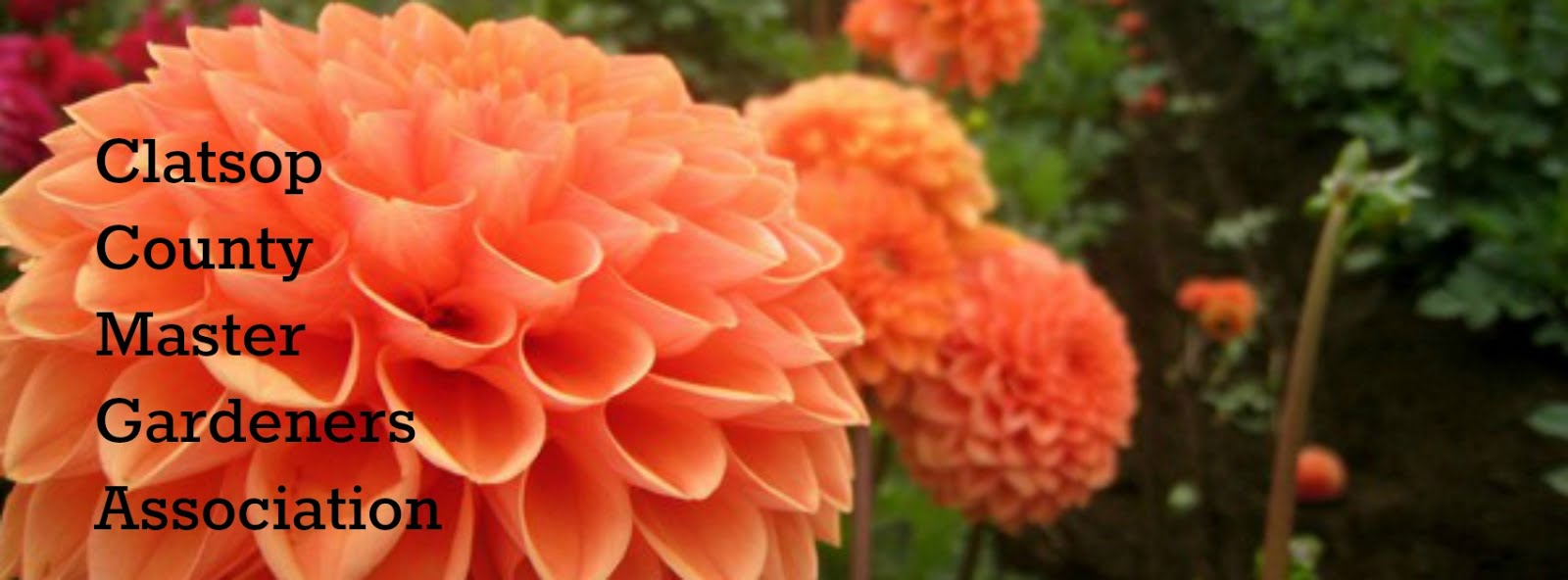 Clatsop County Master Gardeners Association