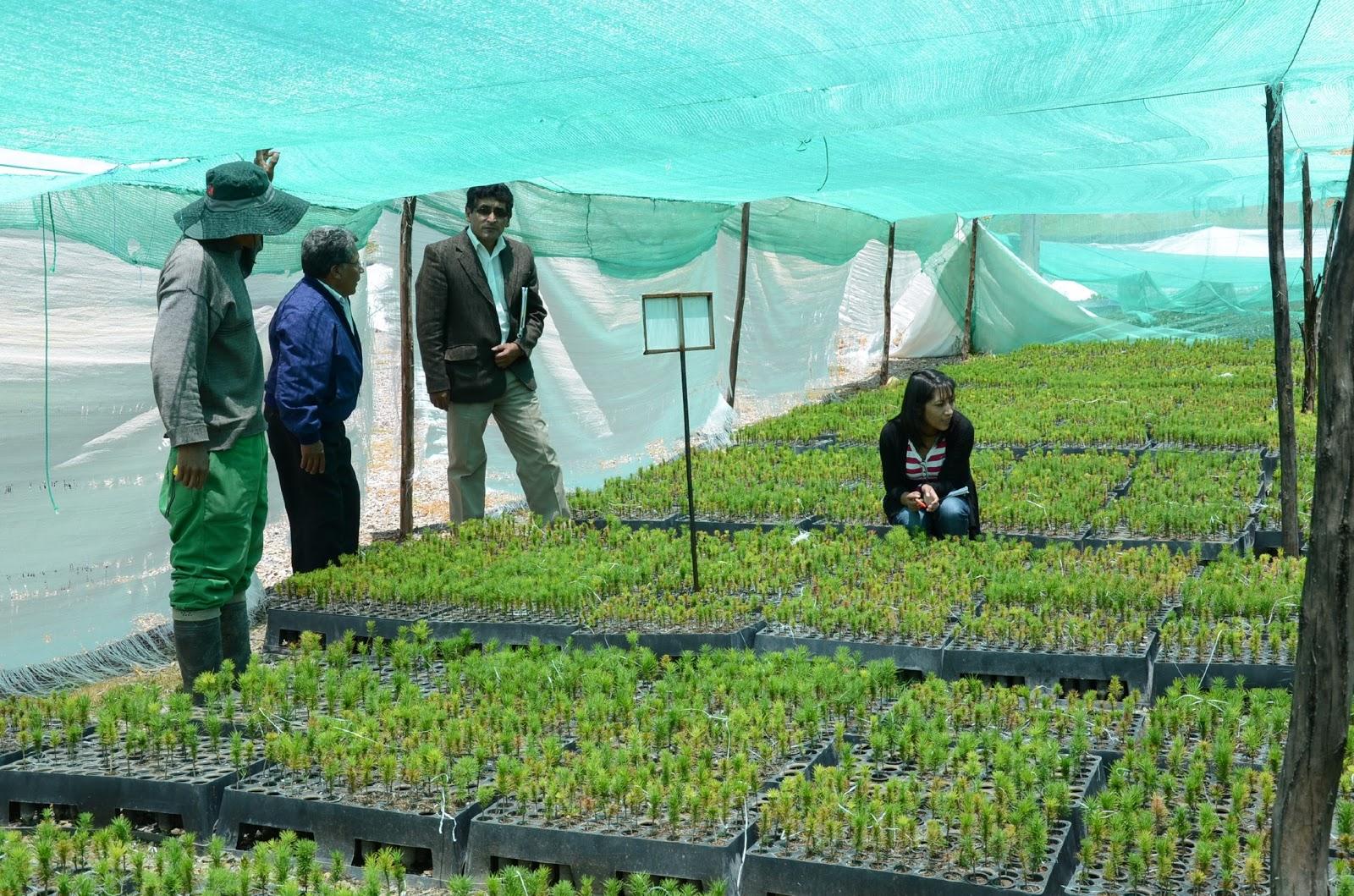 Jun n regi n verde por el mes forestal gobierno regional for Proyecto vivero forestal pdf