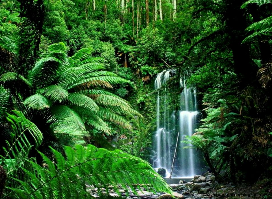 Tropical Rainforest Waterfalls