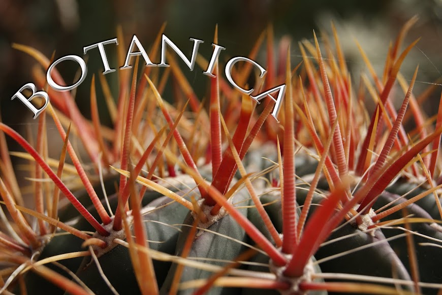 Botanica