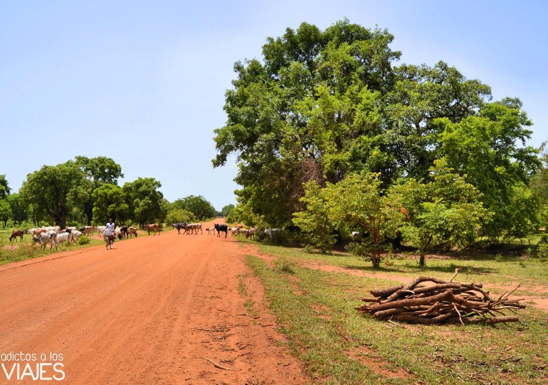 botiquin-vacunas-africa