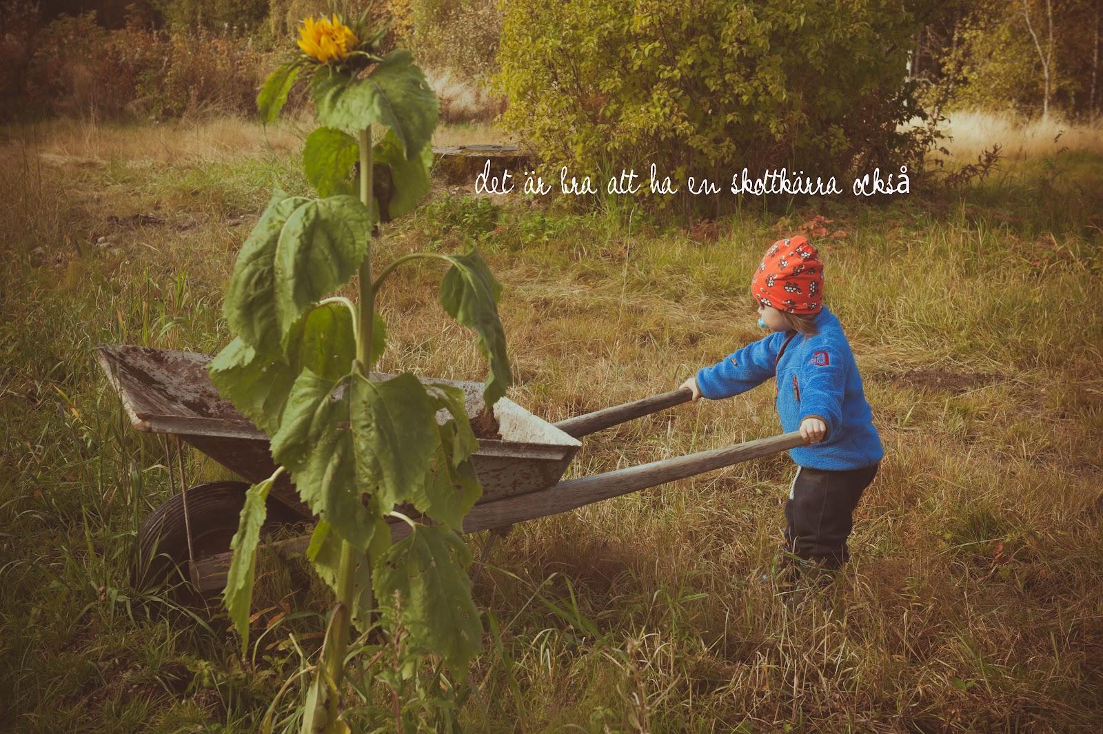 Den som planterat ett träd u2026 u2013 Hos Helena H