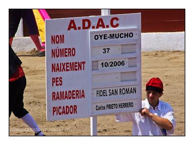 Oye Mucho - novillo de Fidel San Román - Céret 11 juillet 2010