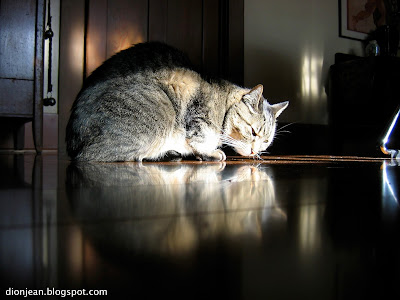 Eamon the brown tabby on a shiny floor