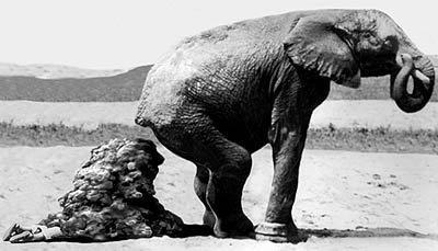 Elephant cleaning photo ass