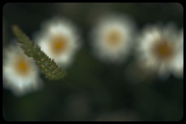 Kwiatki na Gubałówce. fot. Łukasz Cyrus