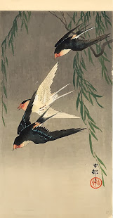 Se você quer liberdade apenas abra as suas asas e não tenha medo de voar, lugar de pássaro é no céu