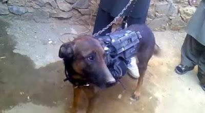 Hewan yang ditangkap polisi