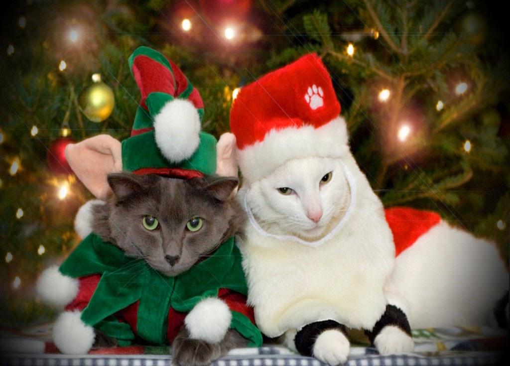 Lustige weihnachtsbilder katzen