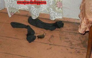 Smjesne slike, toliko smrde, da je i miš, ugino pored,pacov