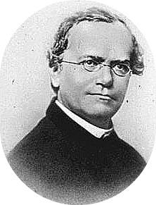 gregor mendal biography Gregor mendel biography botanist, scientist (1822–1884) quick facts name gregor mendel occupation botanist, scientist birth date july 22, 1822.