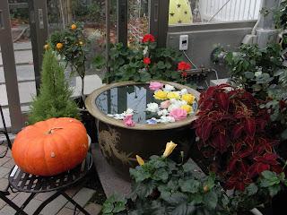 ハロウィンの季節ですので、カボチャもあります