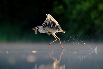 Best Wildlife Pictures2011