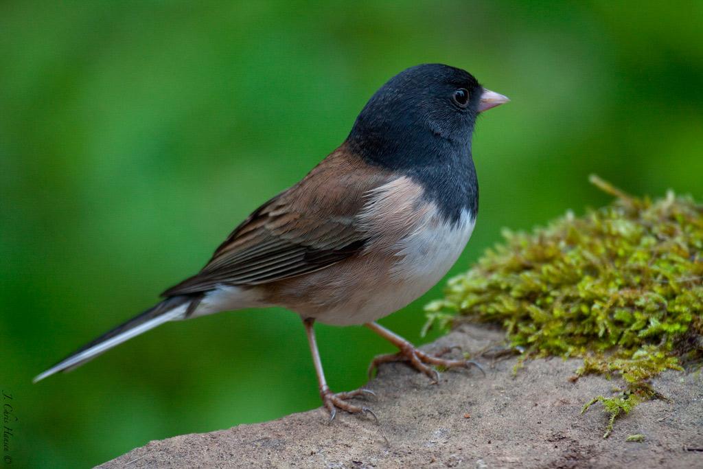 chris the photog backyard birds