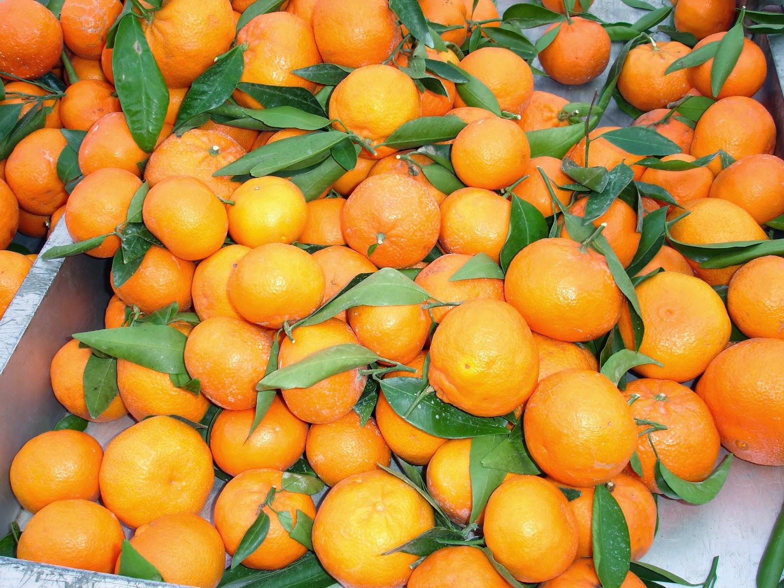 kochbuch f r max und moritz tierfreitag marokkanischer orangensalat mit datteln und mandeln. Black Bedroom Furniture Sets. Home Design Ideas