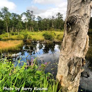 Keindahan Taman Nasional Wasur Merauke, Serengeti Papua