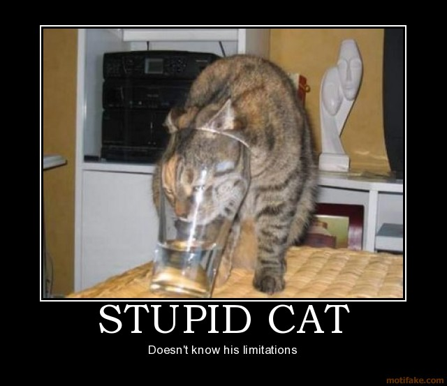cat+funny+picture