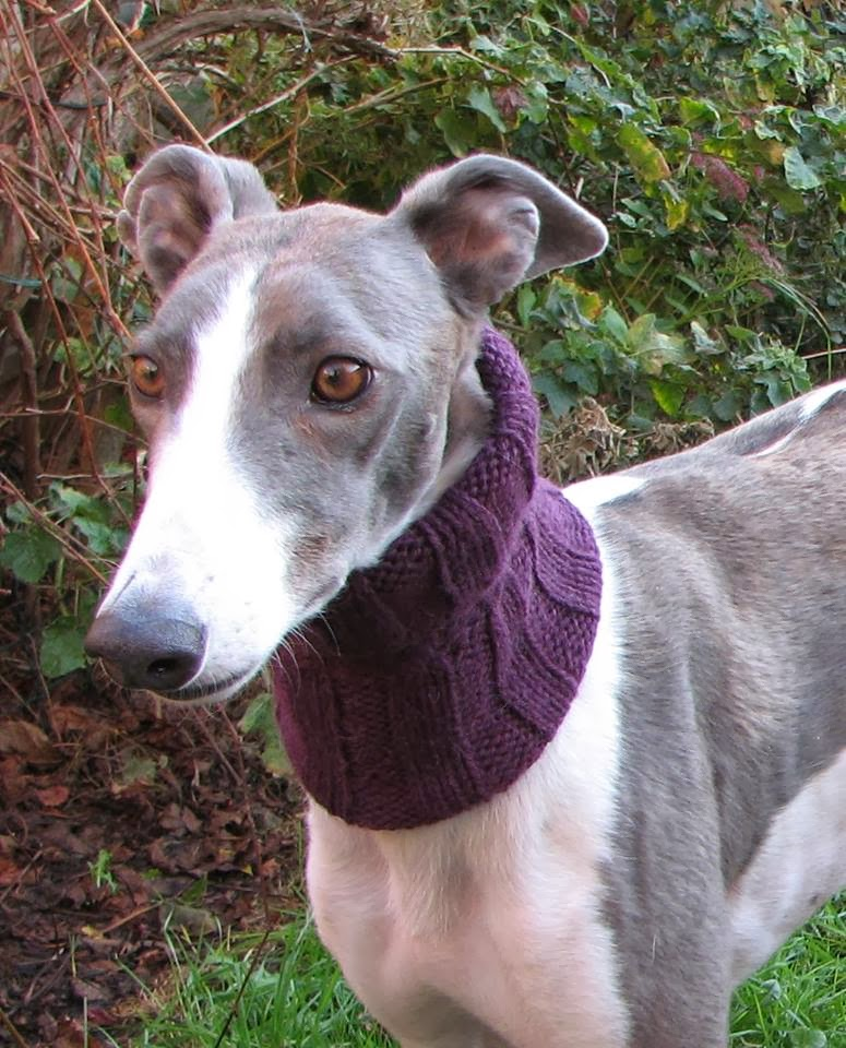 Knitting Patterns For Greyhound Dogs : Greyhound Snood Knitting Pattern Related Keywords - Greyhound Snood Knitting ...