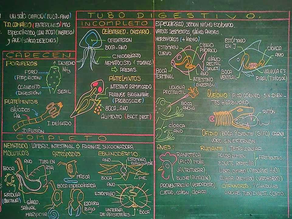 Biología didáctica: Ingeniería - BIO: Anatomía Comparada Digestivo ...
